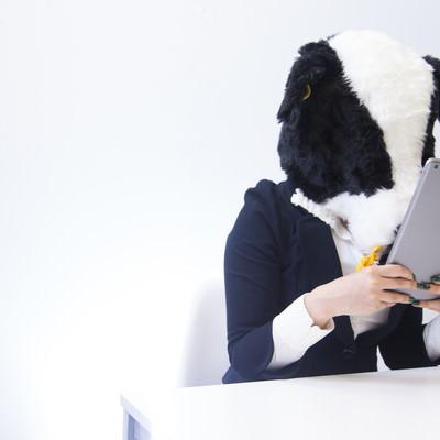 「バズった記事を二度見する牛ブロガー」の写真素材