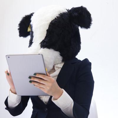 「スキャンした冊数をタブレットで確認する牛さん」の写真素材