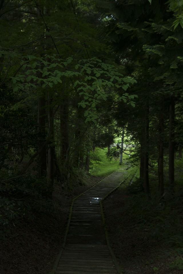 うっそうとした森の写真