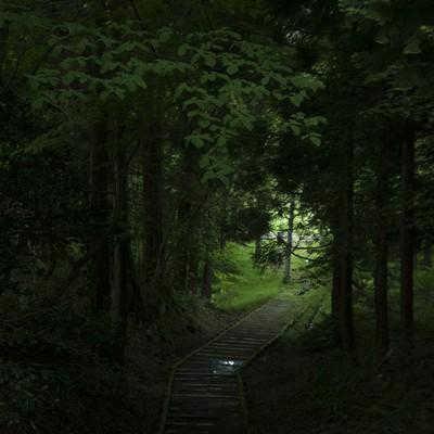 「うっそうとした森」の写真素材