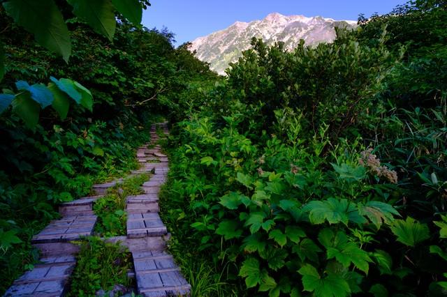 猿倉から白馬岳を目指す登山道の写真