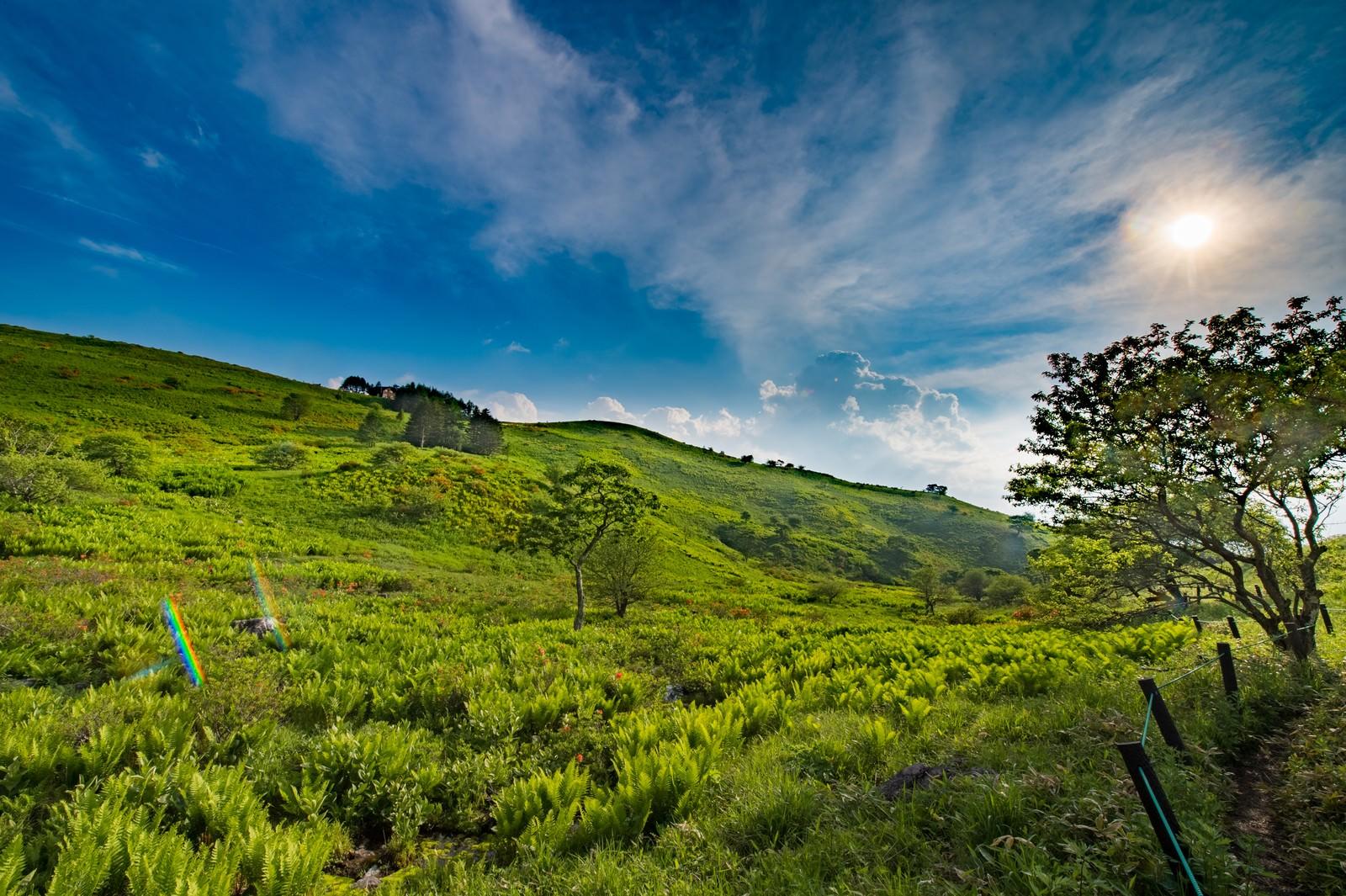 「夏の霧ヶ峰高原(HDR)」の写真