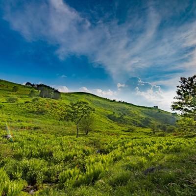 「夏の霧ヶ峰高原(HDR)」の写真素材