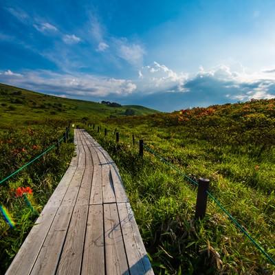 「夏の車山の遊歩道」の写真素材