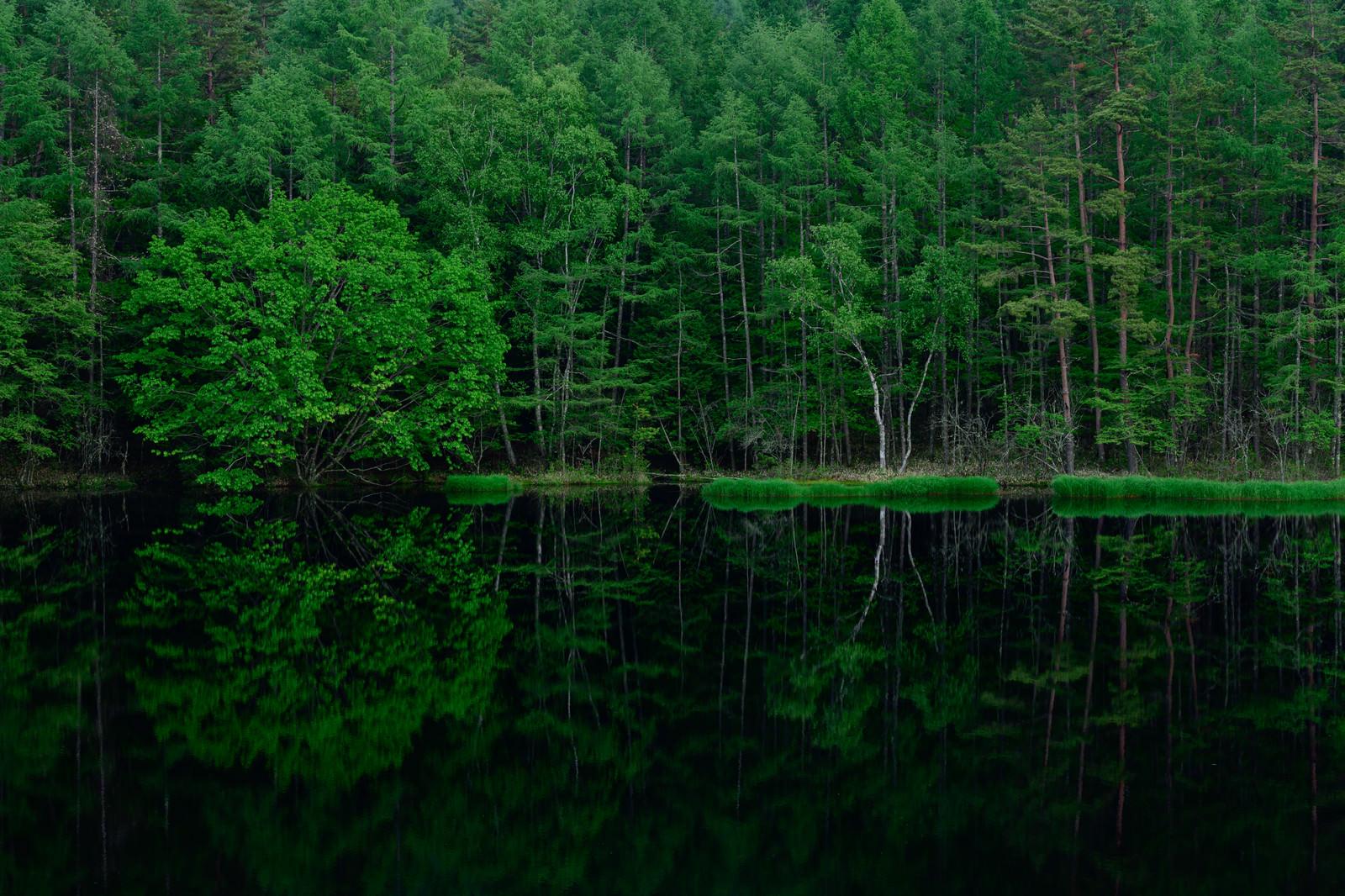 「池の水鏡に映る新緑の森」の写真
