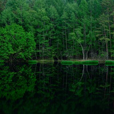 池の水鏡に映る新緑の森の写真