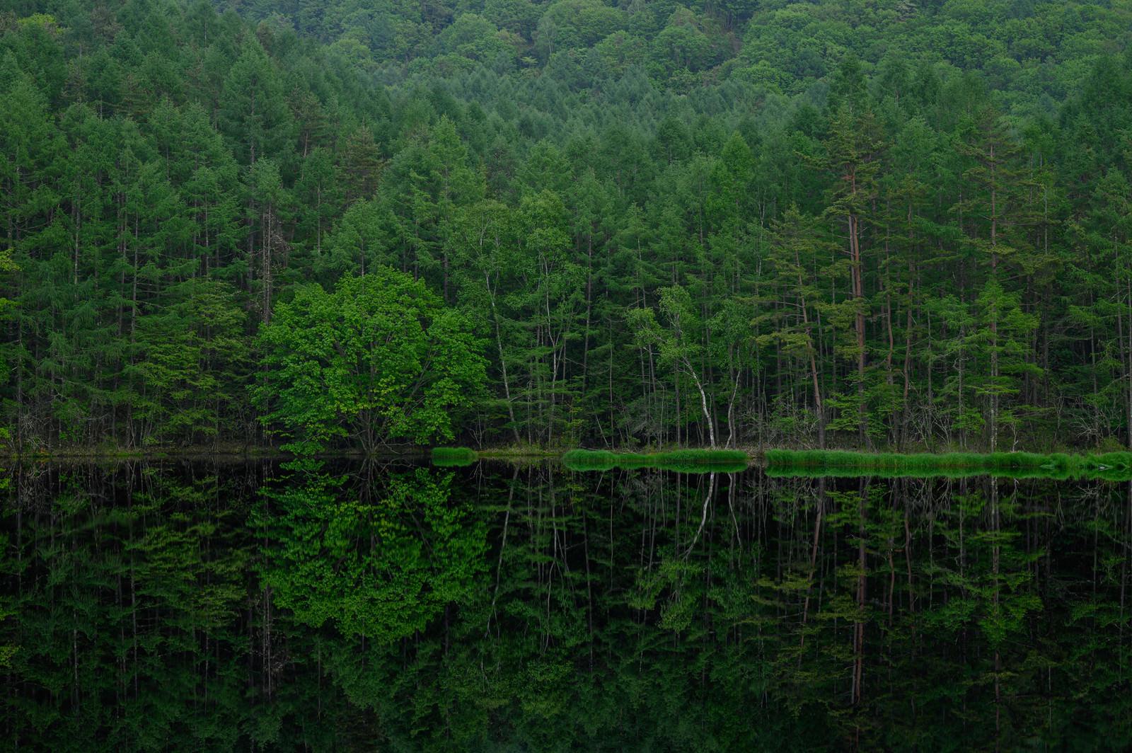「静寂な水鏡(御射鹿池)」の写真
