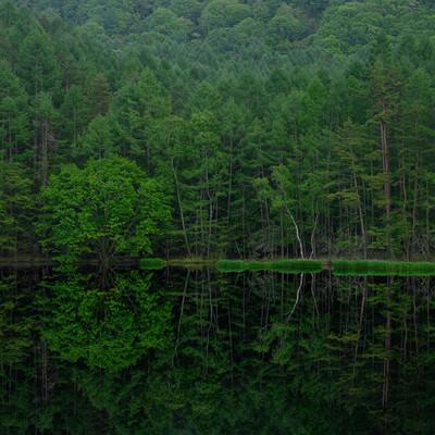 静寂な水鏡(御射鹿池)の写真
