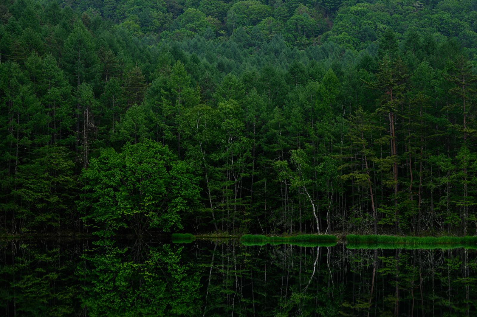 「新緑のリフレクション(御射鹿池)」の写真