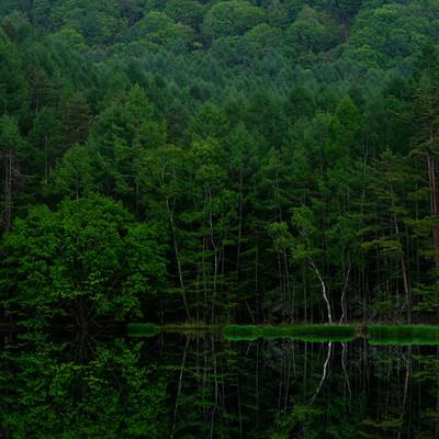 新緑のリフレクション(御射鹿池)の写真