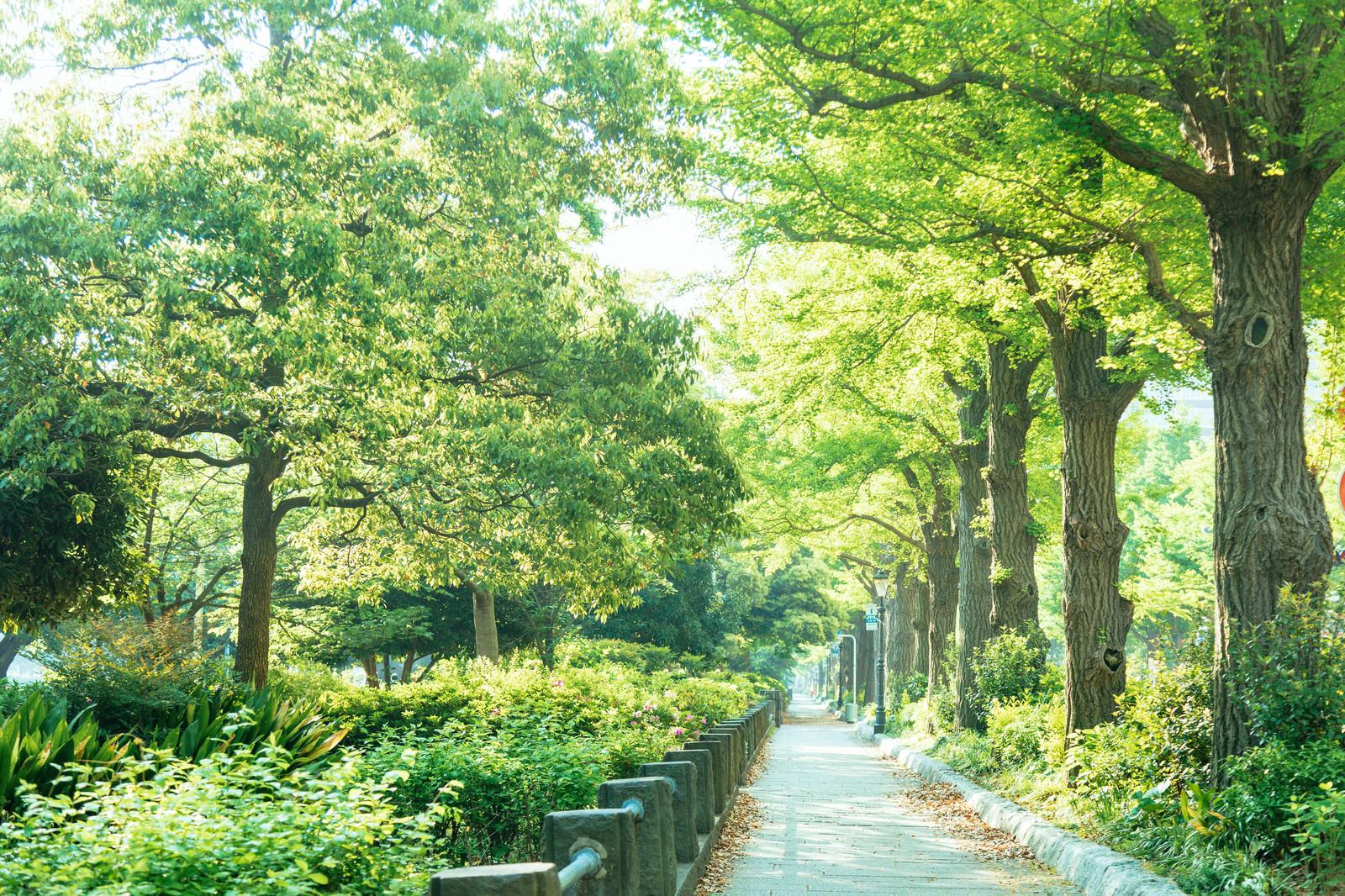 「山下公園の新緑の道」の写真