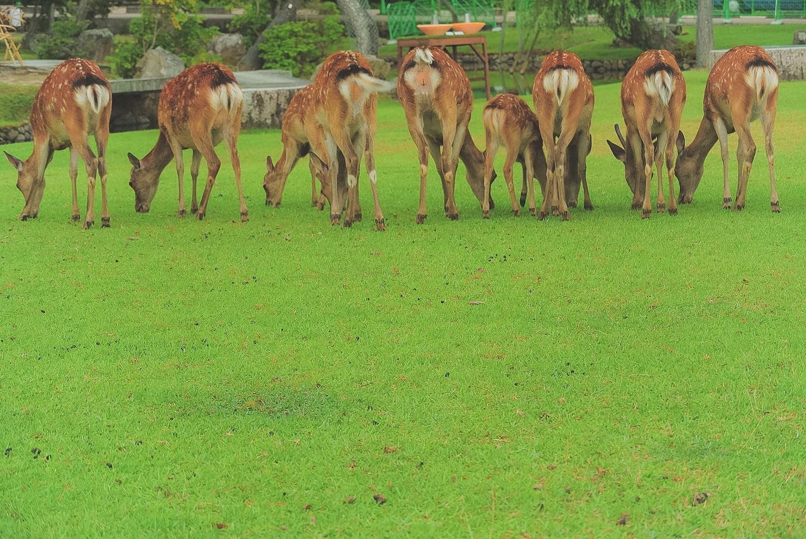 「横一列に並んだ鹿尻」の写真
