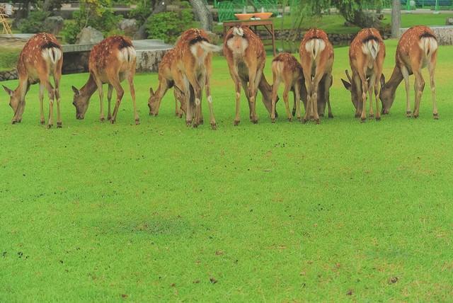 横一列に並んだ鹿尻の写真