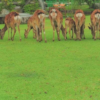 「横一列に並んだ鹿尻」の写真素材