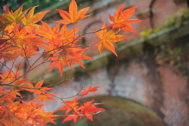 レンガと紅葉の写真