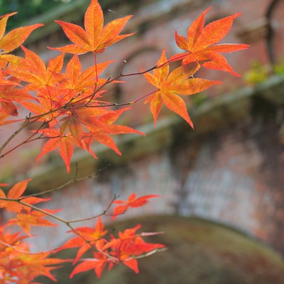 「レンガと紅葉」の写真素材