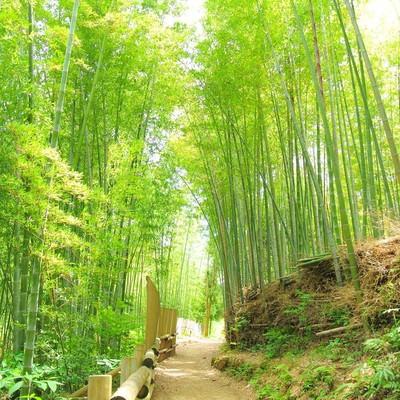 「竹林」の写真素材