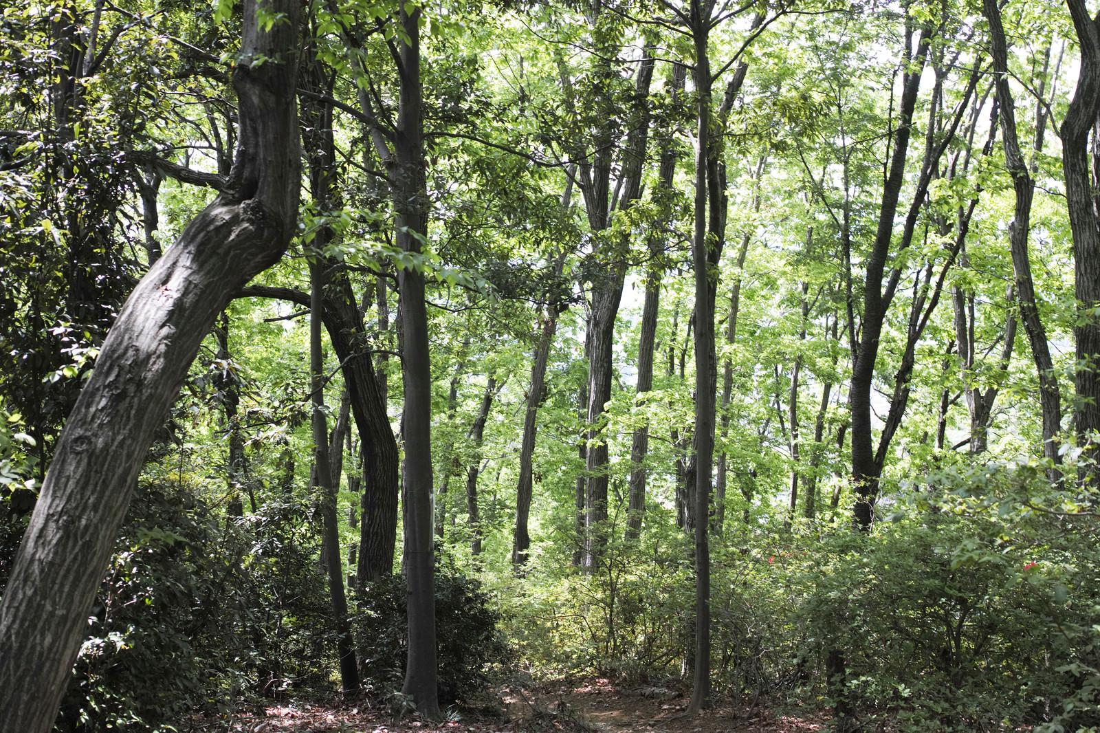 「森の中に進む小道」の写真
