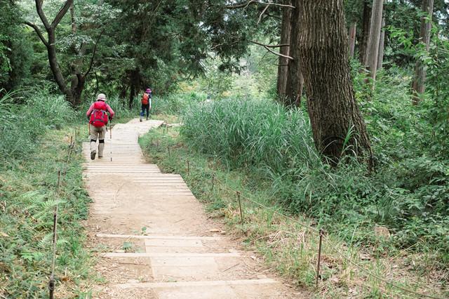 階段状の木道を進む登山者(高尾山)の写真