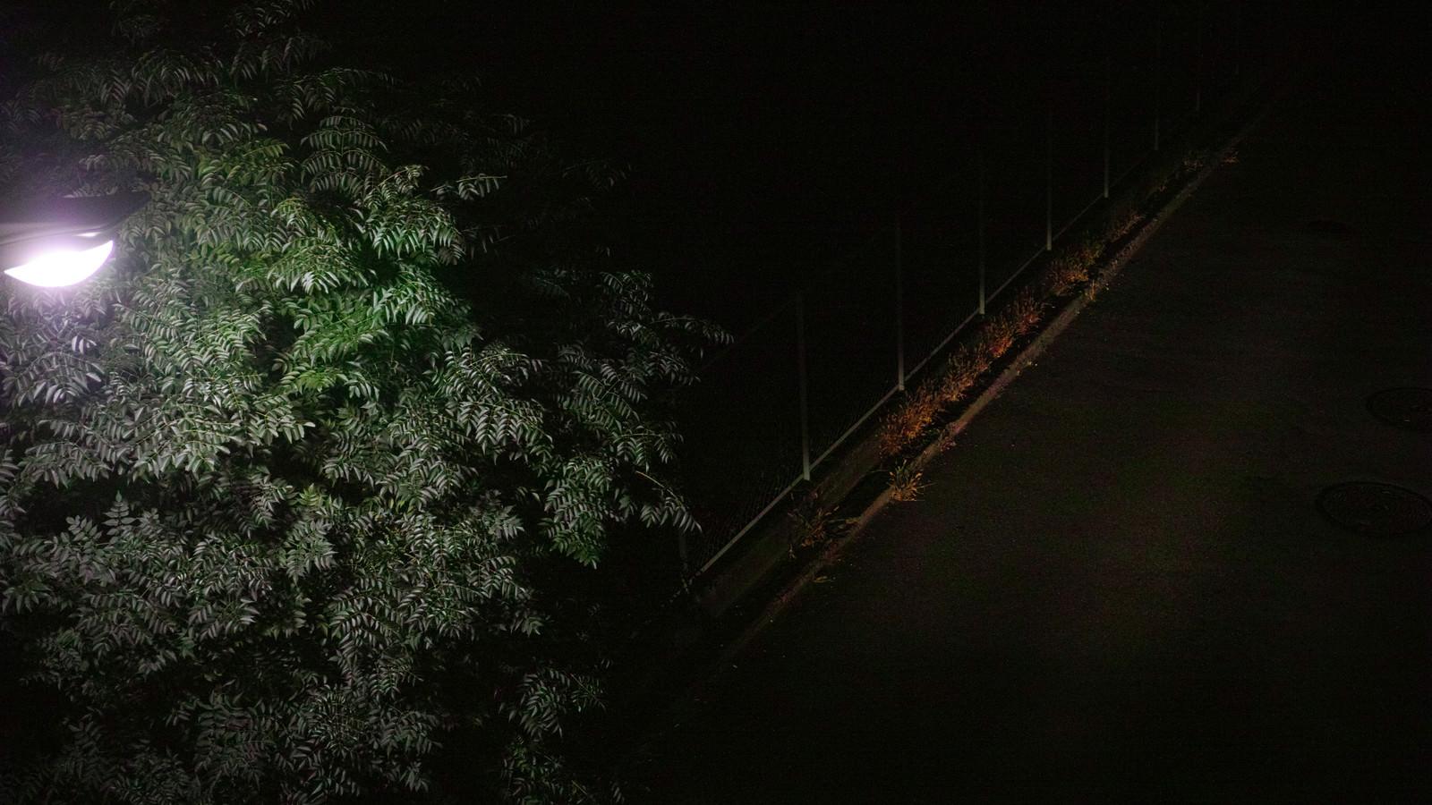 「暗がりの夜道」の写真