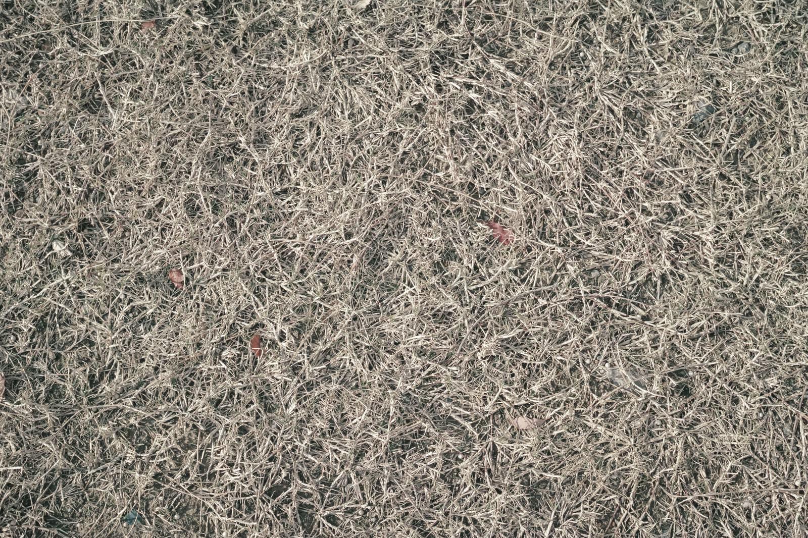 「地面に敷き詰められた枯草(テクスチャ)」の写真