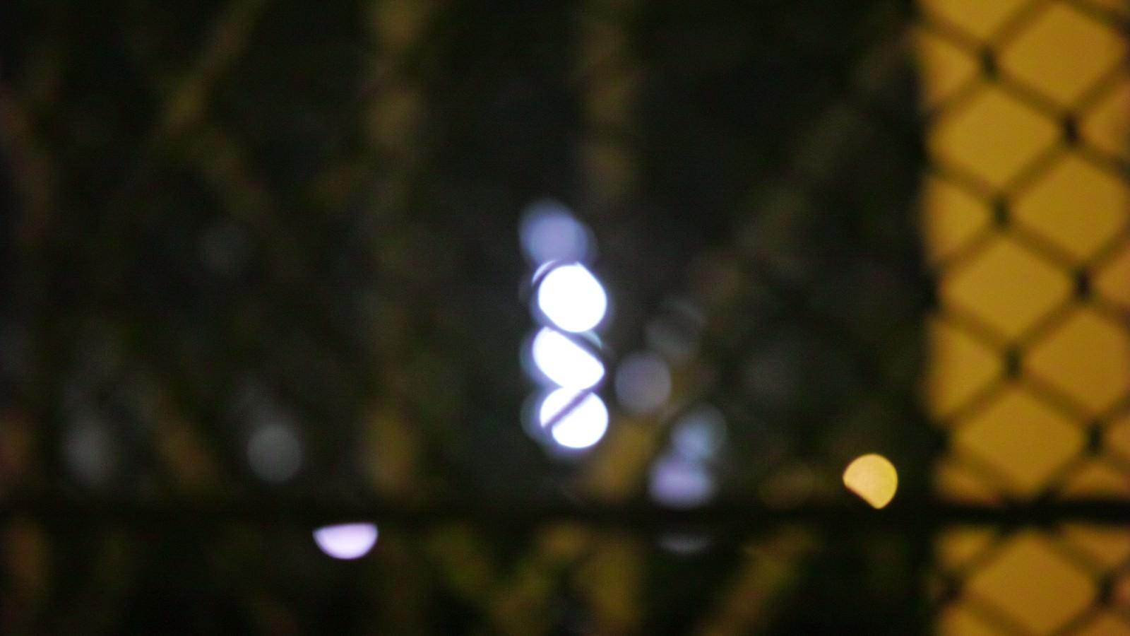 「フェンスの向こう」の写真