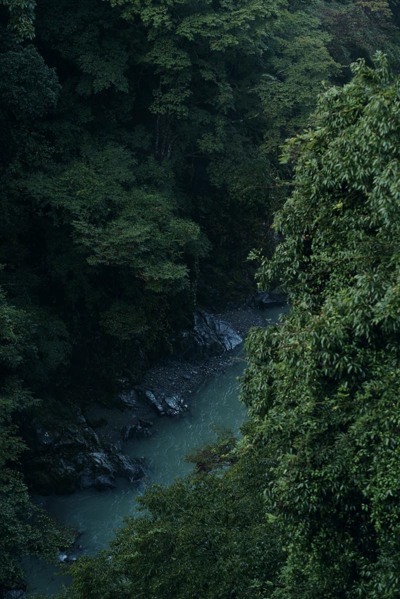 「朝靄の森の渓流」の写真