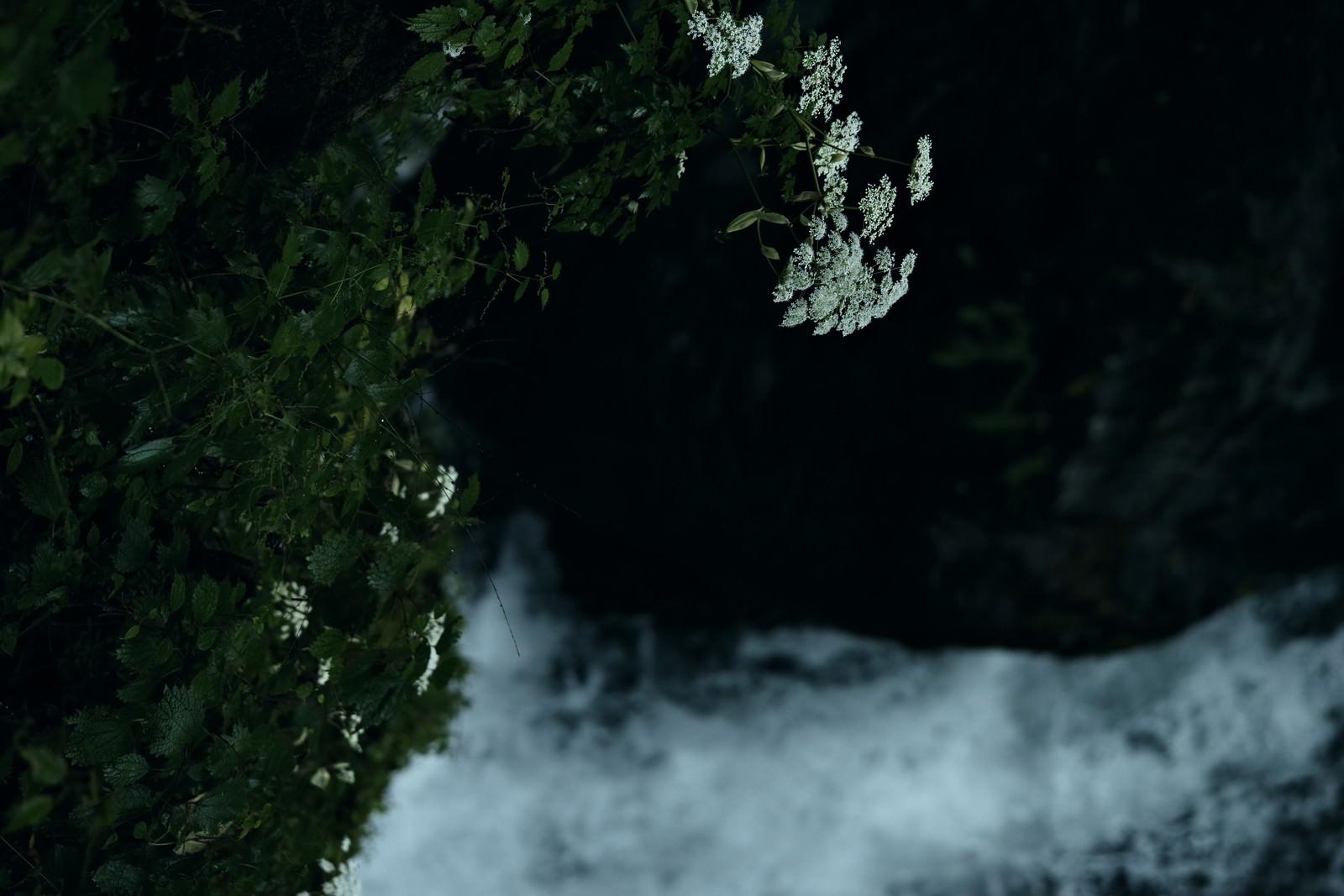 「滝の水しぶきで濡れる植物」の写真