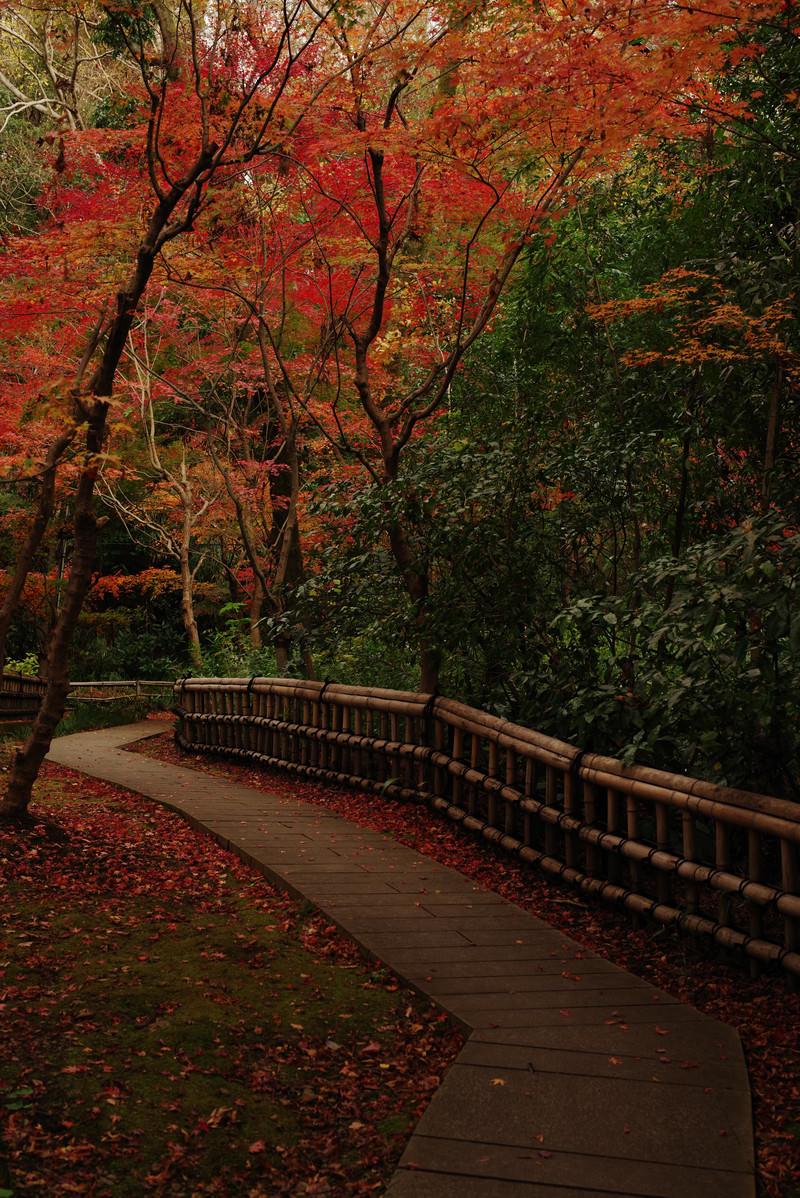「秋の庭園と紅葉」の写真