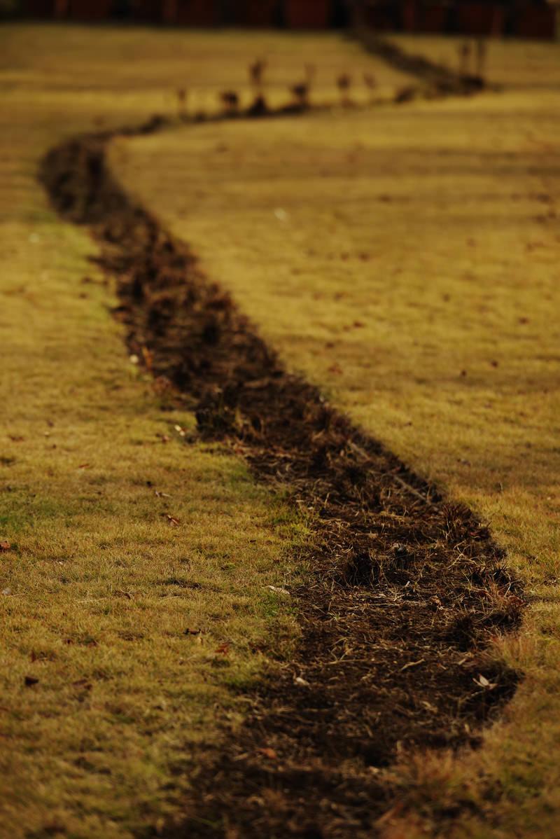 「芝生の中の轍(わだち)」の写真