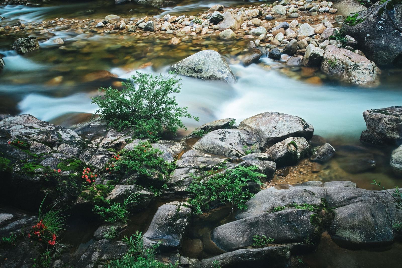 「小戸名の渓流と赤い岩つつじの花 | 写真の無料素材・フリー素材 - ぱくたそ」の写真