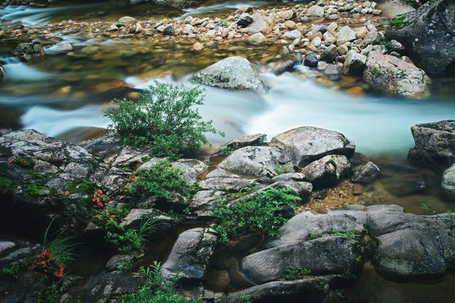 小戸名の渓流と赤い岩つつじの花の写真