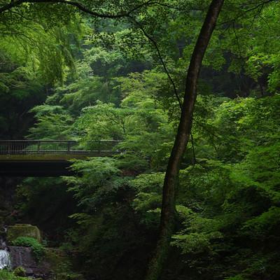 新緑の中に浮かぶ苔むした橋の写真