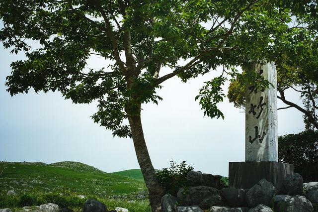 枝に隠れた若竹山山頂の石碑(山口県美祢市)の写真