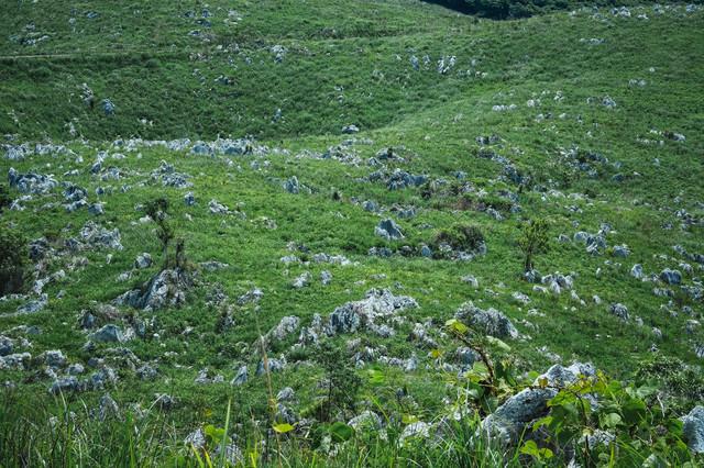 石灰岩が立ち並ぶ緑の草原(山口県美祢市)の写真