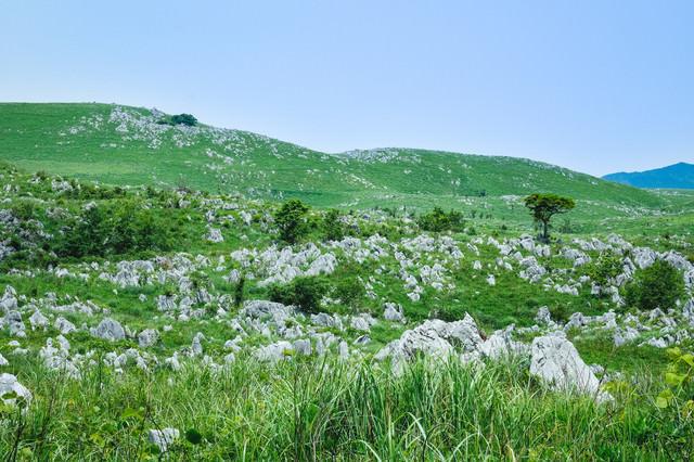 新緑の草原に立ち並ぶ数えきれない石灰岩(山口県美祢市)の写真
