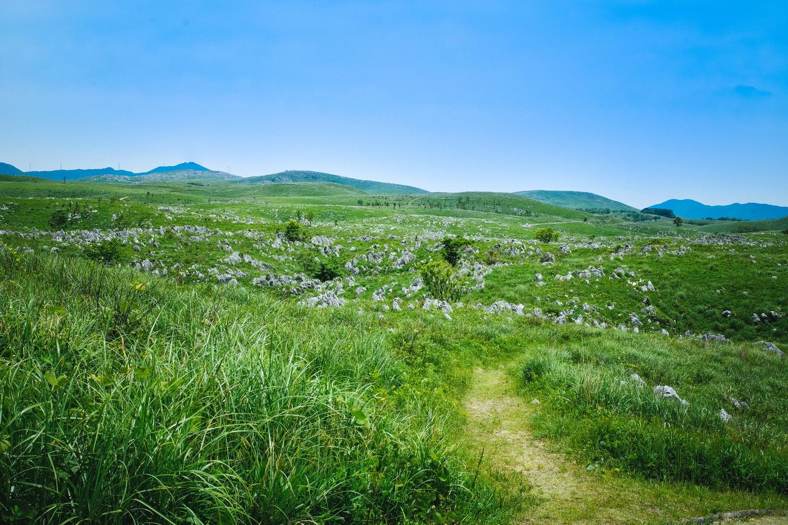 「カルスト台地の草原を進む小道(山口県美祢市)」の写真