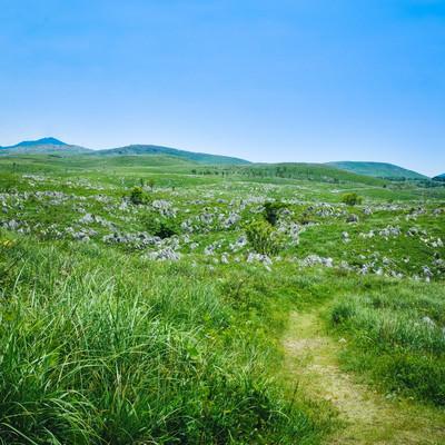 カルスト台地の草原を進む小道(山口県美祢市)の写真