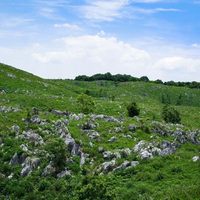 無数の石灰岩が露呈する草原(山口県美祢市)の写真