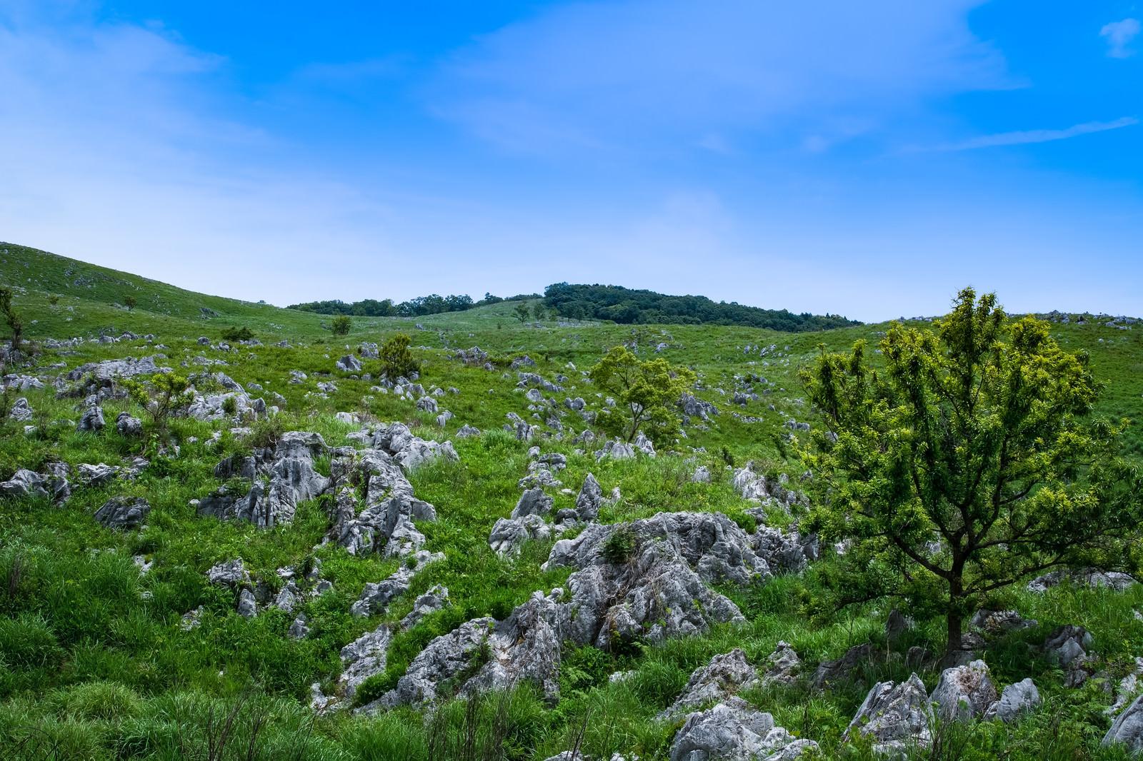 「カルスト台地に育つ草木(山口県美祢市)」の写真