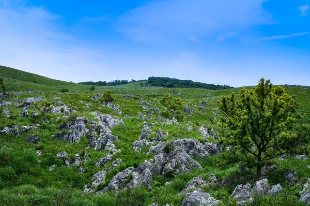 カルスト台地に育つ草木(山口県美祢市)の写真