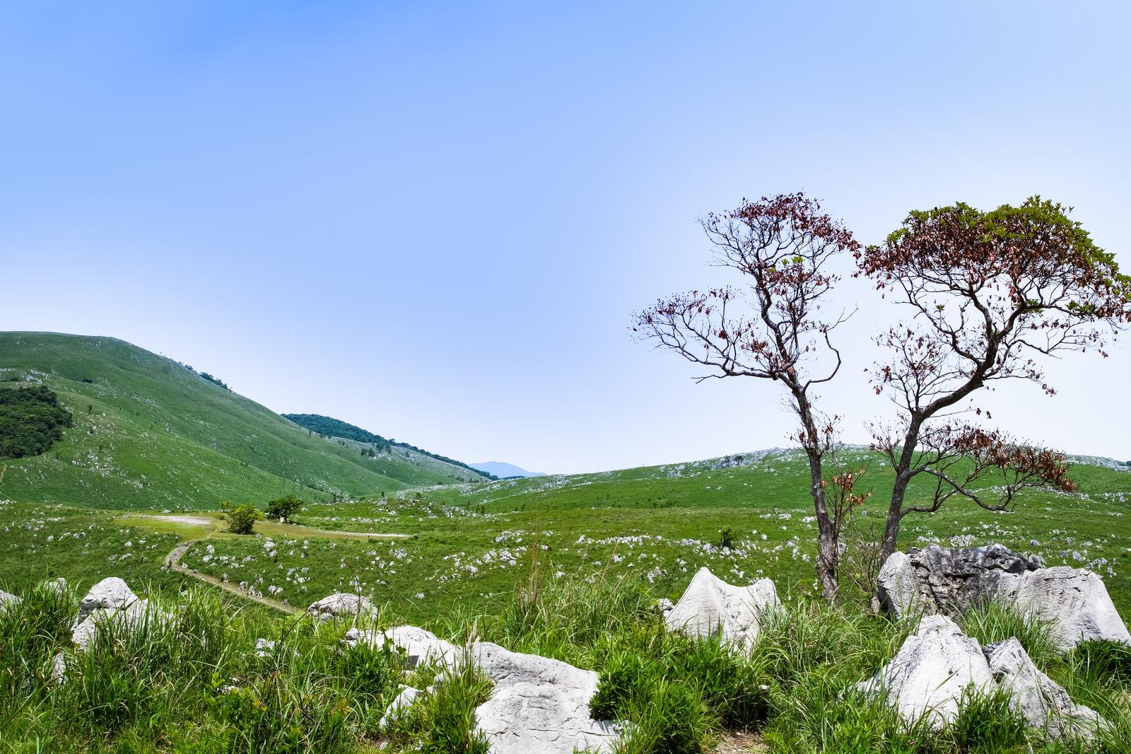 「秋吉台のカルスト台地に続く遊歩道(山口県美祢市)」の写真
