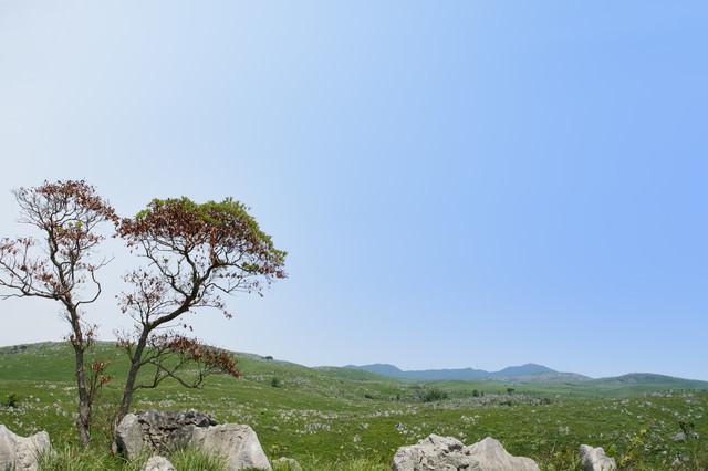 無数に散らばる石灰岩(山口県美祢市)の写真