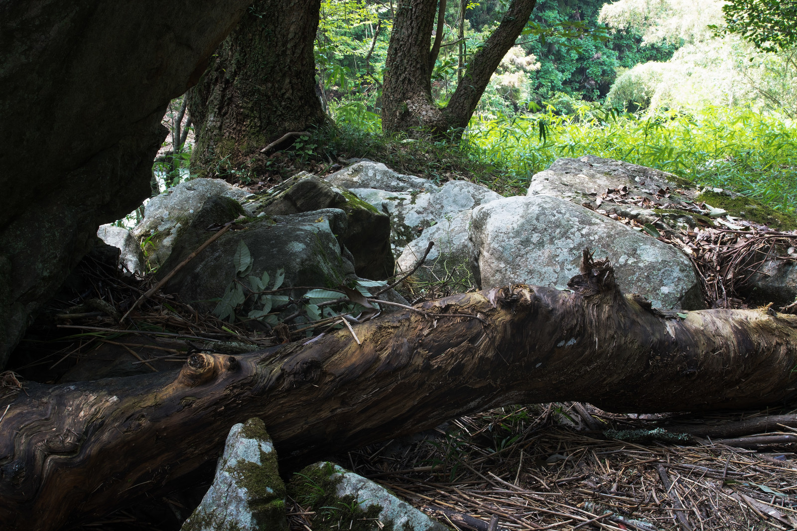 「増量した川から流れてきた岩と流木」の写真