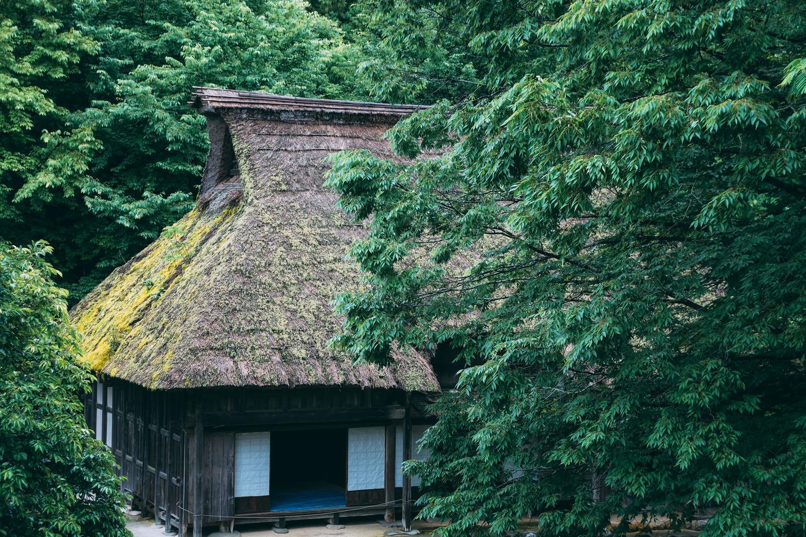 「公園の森の中にある茅葺屋根の家」の写真