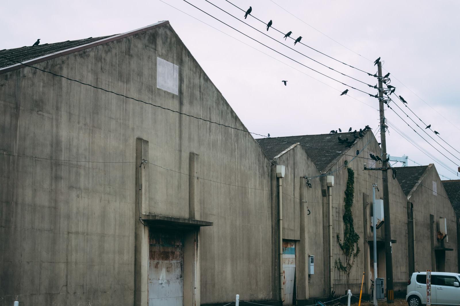 「カラスが集まる古びた港の倉庫」の写真