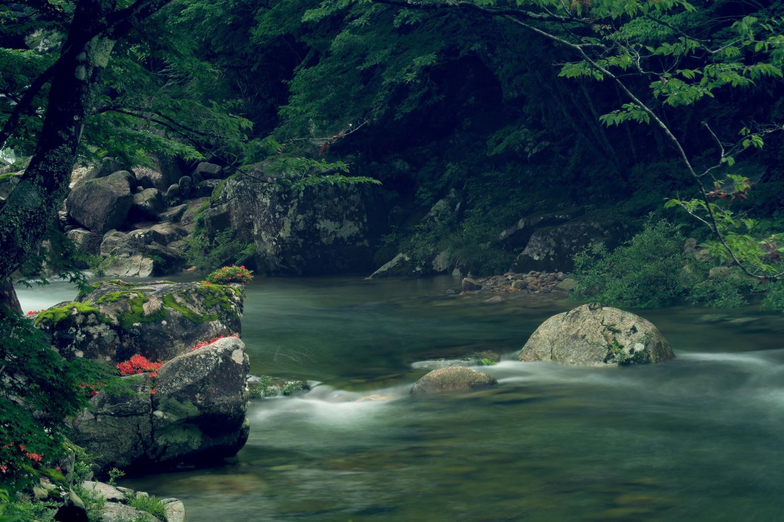 「小戸名渓谷の岩つつじ」の写真