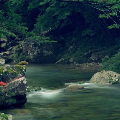 「小戸名渓谷の岩つつじ」の写真素材