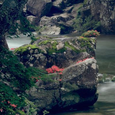 岩つつじが咲く渓流の巨岩(小戸名渓谷)の写真