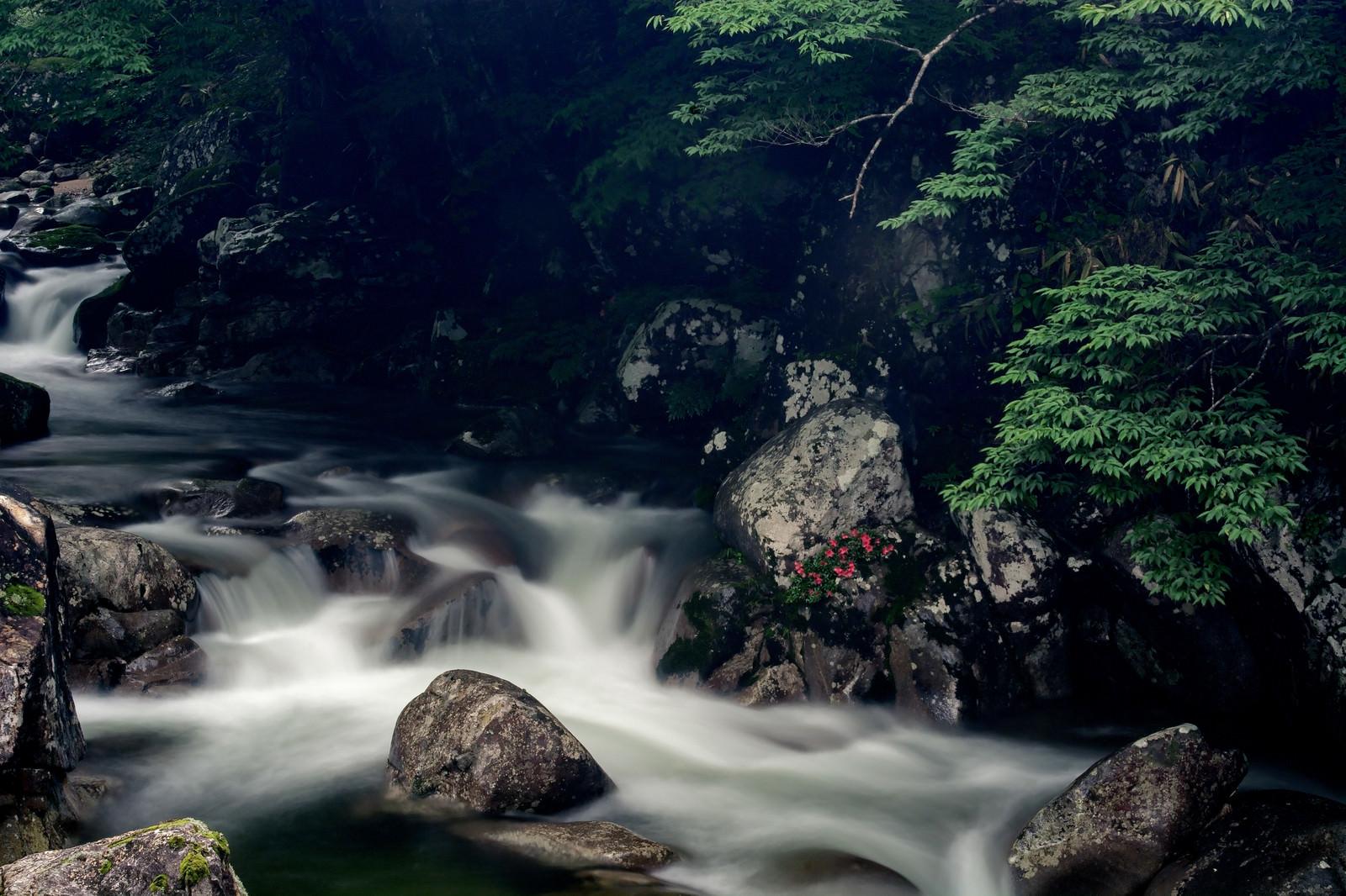 「渓流と岩ツツジ(小戸名渓谷)」